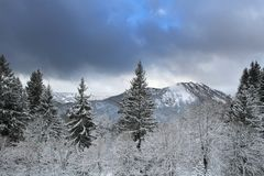 De ochtend van de winter in Alpen Stock Afbeelding