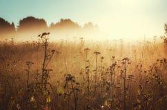 De ochtend van zonlicht op gebied Royalty-vrije Stock Fotografie