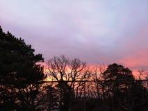 De ochtendaard van de zonboom royalty-vrije stock foto's