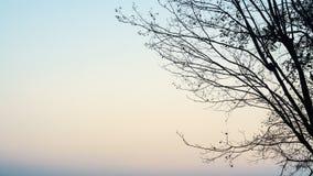 De ochtendatmosfeer Royalty-vrije Stock Afbeelding