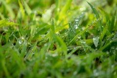 De ochtenddauw doorweekte het verse groene gras dat aan de oranje ochtendzon werd blootgesteld royalty-vrije stock afbeelding