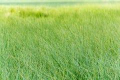 De ochtenddauw op vers groen gras, levendige trillende kleuren op weide, kopieert het ruimte, gezonde leven, yoga, ontspanning royalty-vrije stock afbeelding