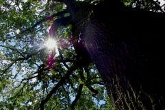 De ochtendzon die door de takken van bomen doordringen Royalty-vrije Stock Fotografie