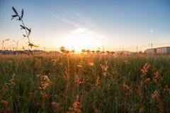 De ochtendzon heeft een mooi oranje licht royalty-vrije stock foto