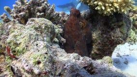 De octopus steelt Videocamera stock footage