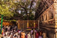 30 de octubre de 2014: El árbol de Bodhi, donde el Buda alcanzó Nirva Fotografía de archivo