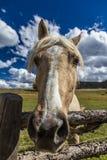 1 de octubre de 2016 - snoot ascendente cercano del caballo, cerca de Ridgway, Colorado - apenas de la colina del registro Foto de archivo libre de regalías