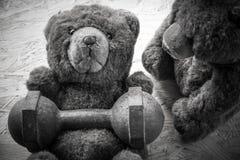 De oefening van het teddybeerpaar met domoren en band Stock Afbeeldingen