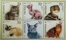 DE OEKRAÏNE - CIRCA 2007: Een zegel in de OEKRAÏNE wordt gedrukt toont katten die stock foto