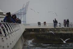 De Oekraïne, Odessa Langeron 5 december, 2015 De mensen lopen op de pijler De vlieg van zeemeeuwen De kranen van de haven Stock Afbeeldingen