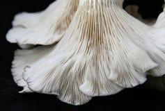 De oester schiet 4 als paddestoelen uit de grond Stock Afbeelding