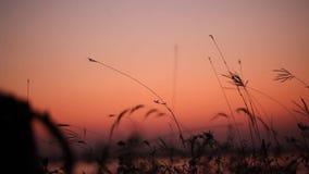 De oever van het meerzonsondergang van avondgrassen stock footage
