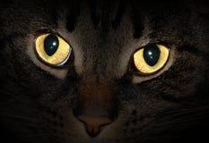 De ogen die van de kat in dark gloeien Stock Afbeeldingen