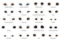 De ogen van de beeldverhaalhond vector illustratie