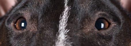 De ogen van de hond sluiten omhoog Stock Fotografie