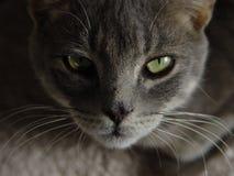 De Ogen van de kat Royalty-vrije Stock Fotografie