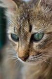De ogen van de kat Royalty-vrije Stock Foto's