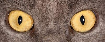 De ogen van de kat Royalty-vrije Stock Foto