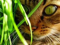 De ogen van de kat in de tuin Stock Afbeelding