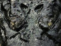 De ogen van de krokodil royalty-vrije stock foto