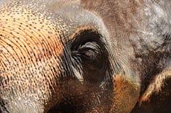 De ogen van de olifant Stock Fotografie
