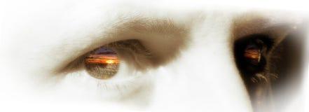 De ogen van de zonsondergang Stock Foto