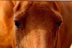De ogen van het paard Royalty-vrije Stock Afbeelding