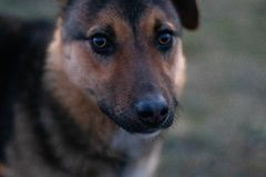 De ogen van de hond zijn enkel als de ogen van de mens stock foto