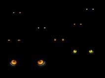 De ogen van katten in dark Royalty-vrije Stock Afbeeldingen