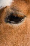 De Ogen van paarden Royalty-vrije Stock Afbeelding