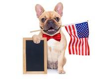 4de oh juli hond Stock Afbeeldingen