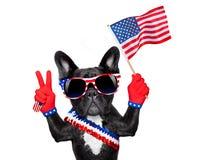 4de oh juli hond royalty-vrije stock afbeeldingen