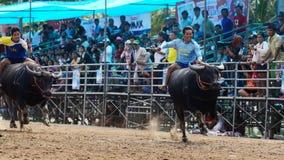 De oidentifierade männen kontrollerar deras buffel för att köra i en tävlings- sport Arkivbild