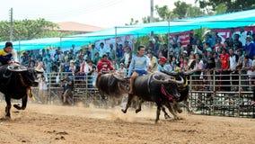 De oidentifierade männen kontrollerar deras buffel för att köra i en tävlings- sport Arkivbilder