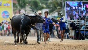 De oidentifierade männen kontrollerar deras buffel för att köra i en tävlings- sport, och de oidentifierade byinvånarna hurrar up Arkivfoto