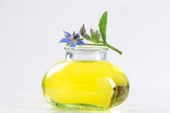 De olie van de borage, Borago Officinalis Royalty-vrije Stock Afbeelding