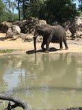 De olifant stock fotografie