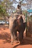 De olifant berijdt mensen royalty-vrije stock afbeelding