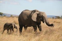 De olifant die van de moeder en van de baby door het gras loopt Royalty-vrije Stock Afbeelding