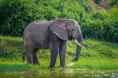 De olifant drinkt water bij de meerrivier stock foto's