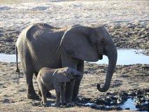 De Olifant en de baby van de moeder Stock Fotografie