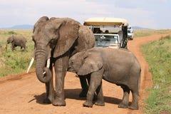 De olifant en de moeder van de baby stock foto's