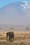 De olifant en zet Kilimanjaro op Stock Foto's