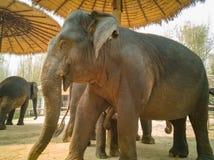 De olifant geeft aan baby de borst stock foto
