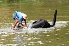 De olifant neemt een bad Royalty-vrije Stock Foto's