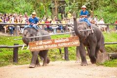 De olifant toont Royalty-vrije Stock Fotografie