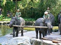De olifant toont Stock Foto's
