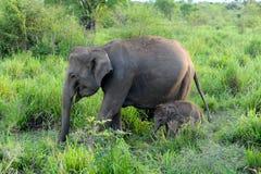 De olifant van de baby Stock Afbeeldingen