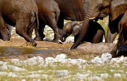 De olifant van de baby royalty-vrije stock afbeeldingen