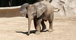 De Olifant van de baby met zijn oren uit en boomstam neer Stock Foto's
